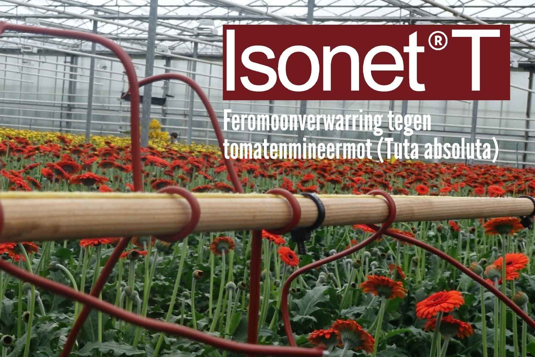 IsonetT
